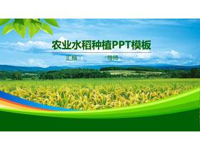 绿色稻田背景的农业PPT模板